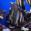 Peixos al Palma Aquarium